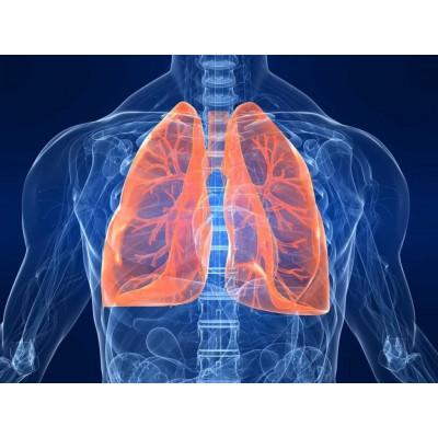 Заболевания органов дыхания. Диагностика и лечение – 36 ч.